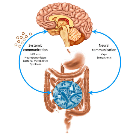 Conexión Intestino-Cerebro y Mindfulness