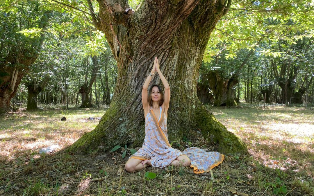 dianaprieto-arbol-retiro-meditacion-mindfulness