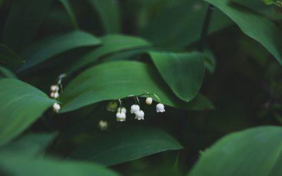 MBSR ONLINE| Reducción de estrés basado en Mindfulness | Primavera 21